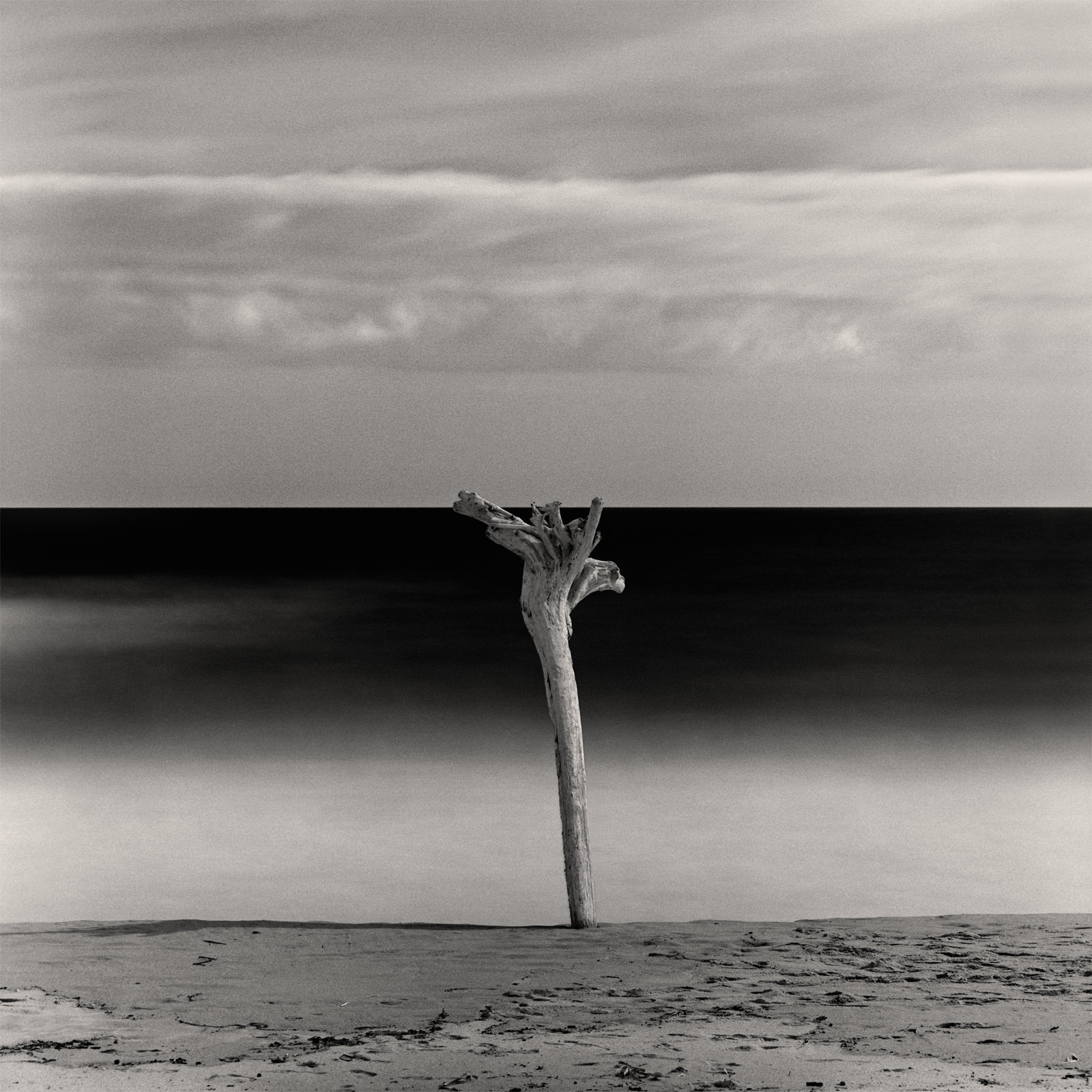 Minimalist long exposure seascape daytime photo with dramatic sky, smooth water and dead tree on sandy beach, black-white archival fine art print for sale
