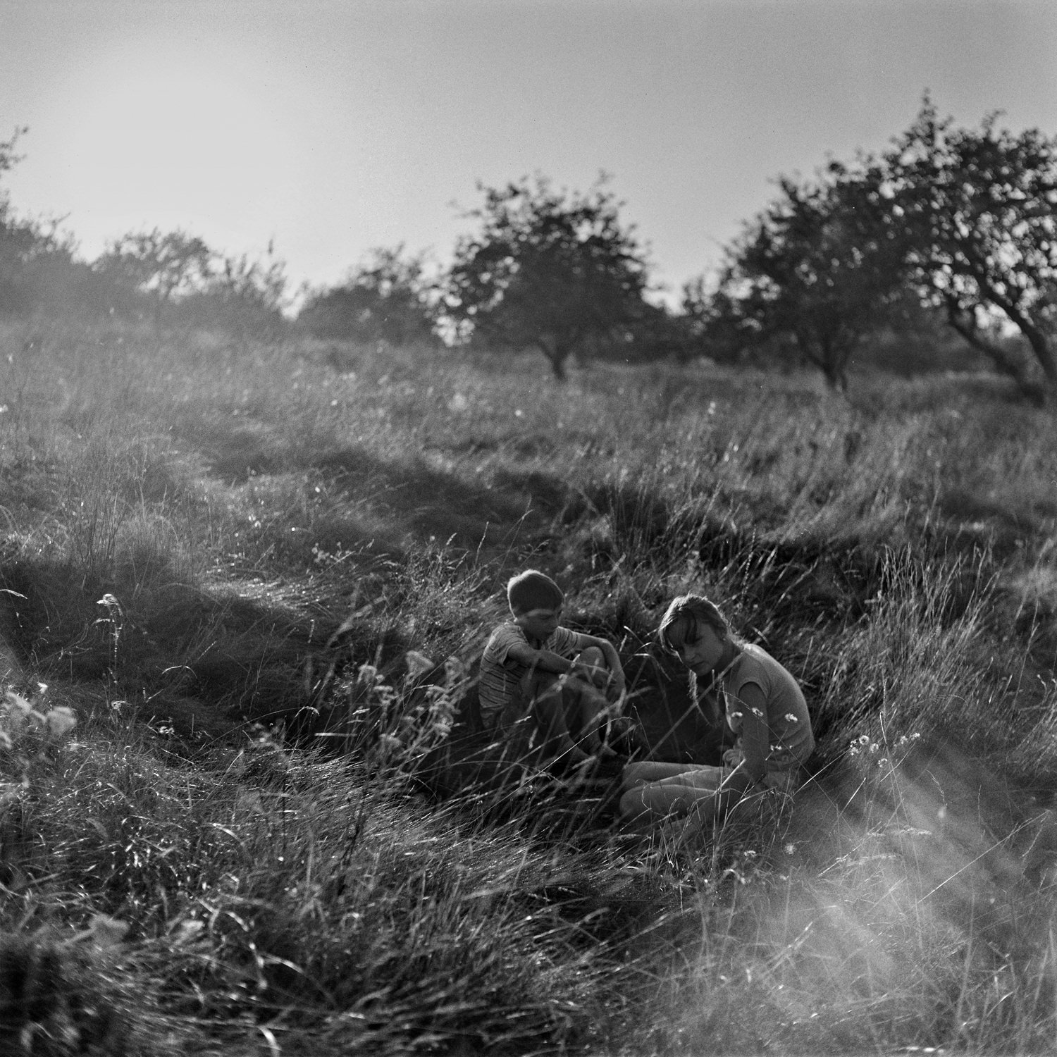 Atmospheric portrait of two kids sitting in the deep grass of apple orchard at sunset made with black-and-white silver film and medium format camera Yashica Mat G124